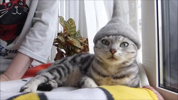 ブラッシングで採取した抜け毛で猫ちゃん専用の特製帽子を作ってみた結果…。似合いすぎwww