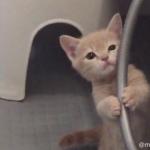 Twitterで話題の可愛すぎる子猫のミルくん♪愛くるしい姿の詰め合わせに癒される事間違い無し!!
