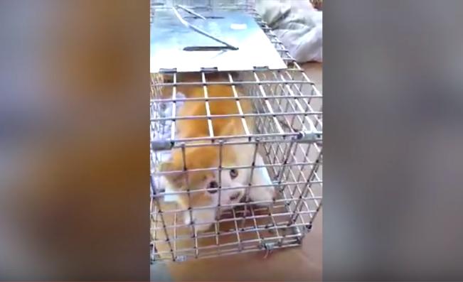 救出まで100時間『助けられるのは私たちしかいない!』排水溝に落下した子猫