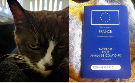 ロンドンからパリへ・8年間450kmを冒険したメス猫!彼女を迎えに行った彼