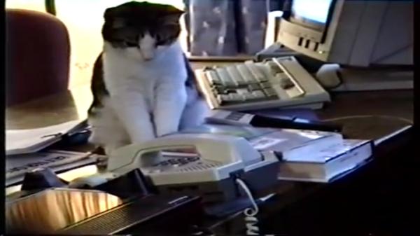 電話に出たのに無慈悲に放置した猫ちゃん「これでよし」ww