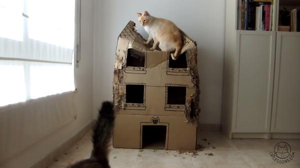 【猫たちの遊び場】ダンボールのキャットハウスを三匹の猫ちゃんたちで一年間使用した結果…【哀愁すら漂う】