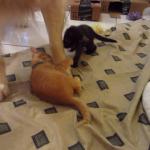 【子猫と優しいワンちゃん】ワンちゃんの足にまとわりつくやんちゃな子猫たち(笑)