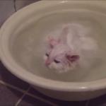 「まだお風呂から出ないにゃ~」自らお湯に浸かって至福の表情を浮かべる猫ちゃん(笑)