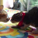 「きみ、ハリネズミ?」いいえ、子猫ですよ♪緊張でまるでハリネズミみたいになっちゃう子猫!
