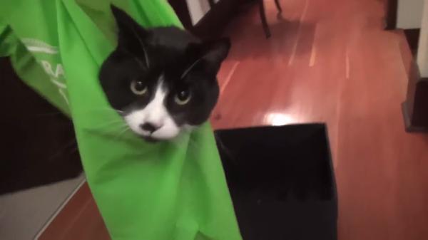 「ゆらゆらして!」袋に入って運ばれるのが大好きな猫ちゃんw