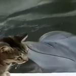 イルカと遊ぶ猫!?めっちゃ仲良しでかわいい~!!