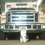 極寒のある日『ここで温まってもいいですか?』消防署の一員に加わった猫
