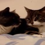 「ね~あれやって?」「いいよ~」二匹のおしゃべり猫の声がかわい過ぎてもう・・・!
