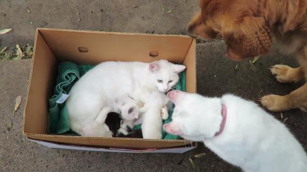 「見せて~」赤ちゃんを見に来たパパ猫さんとわんちゃん!