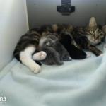 出産で離ればなれになった猫のカップルが再会♡そして、永遠の家族へ