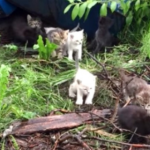 『あれは子猫?』猫の鳴き声をまねしてみたら20匹の子猫が隠れていた