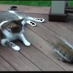 リス「どんぐり頂戴!」猫「あげにゃい」よそ見した結果・・・ww