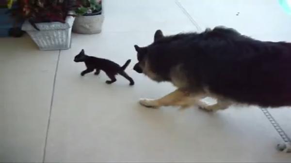 子猫「冒険だ!」犬「心配だ…!」プールに落ちた子猫を心配する犬が優しい♡