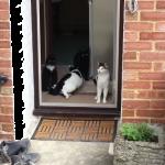 「こわぁ…無理!」「い、行ってみる」初めてお外に出る四匹!恐るおそる進む姿がかわいい~♡
