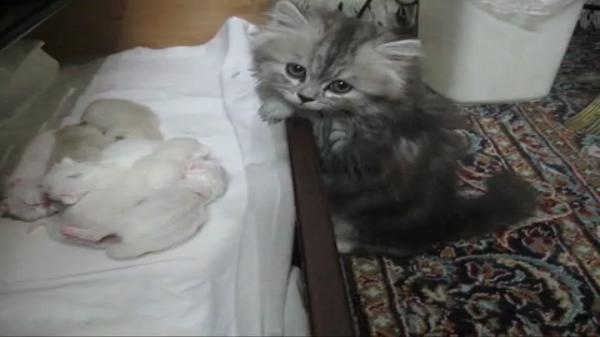 「赤ちゃんちっちゃいね~!」そう言うあなたも子猫でしょ(笑)