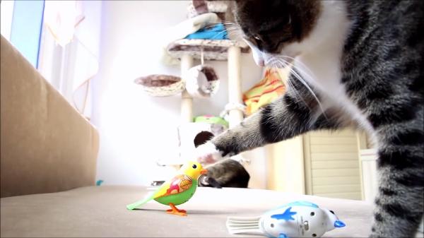 おもちゃの小鳥に翻弄される二匹の猫♪「・・・鳥?どこ?」