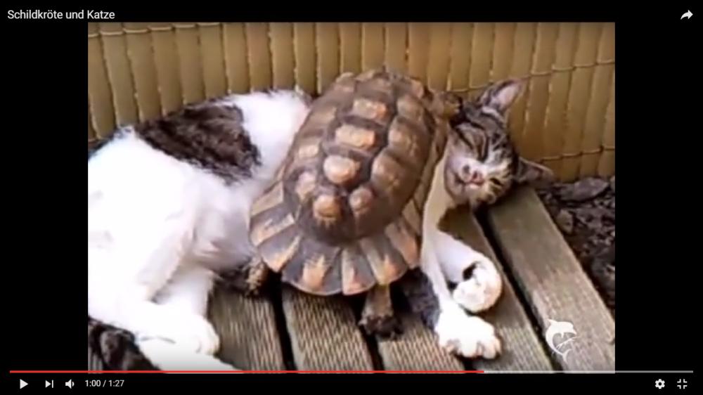 意外な仲良しコンビ☆一緒にお昼寝中の猫ちゃんと亀が可愛い!♡