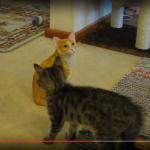 ねぇねぇ一緒に遊ぼうにゃ~!!ハイテンションでお誘いするものの、相手は猫ではなかった…?(笑)