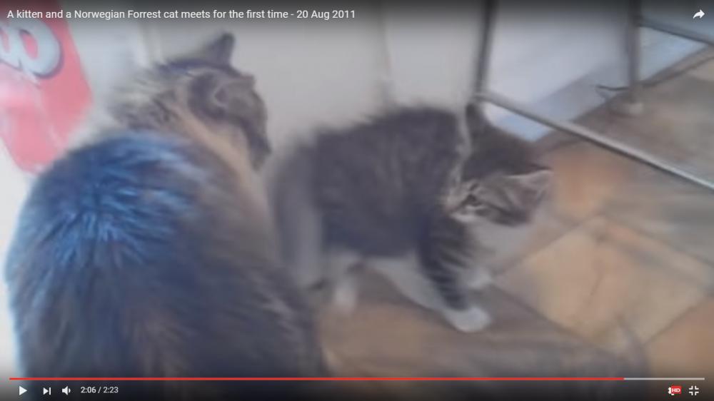 子猫ちゃんが新しい家族としてやって来た!!先住猫ちゃんと対面した二匹の反応とは…?