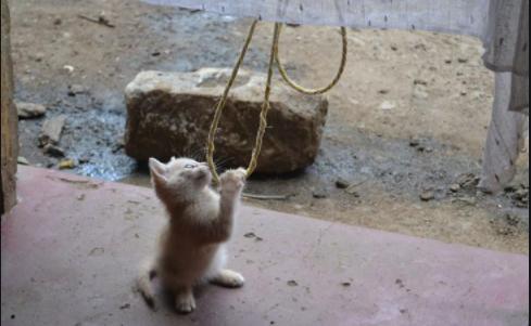『その猫はネズミを捕らないのかい?』私の家に転がり込んだやせっぽちの小さな子猫