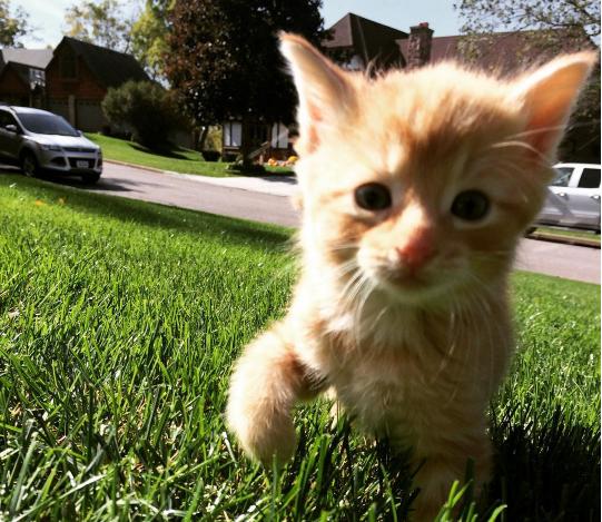 『ゴミ箱から子猫が顔を出したの』早朝に出勤した彼女がゴミ捨て場で見つけた小さな子猫