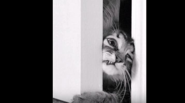 外が大好き!でも、家に入りたくなったら全力で入ろうとする猫たち『早く入れてくださ~い!』