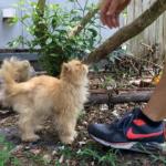彼は引っ越し先で猫を飼い始めた。ぼくと彼を夢中にさせた野良の痩せたペルシャ猫だ。