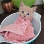 生後間もなく孤児になり生死の境をさまよった子猫『頑張ったね。体重が3倍になったよ!』