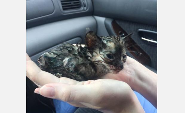『ねぇ、あれは小猫じゃない?』雨の中、彼女がウィンドウ越しに見つけた子猫