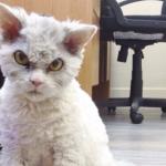 アーティストのインスピレーションを刺激します『見ているからね。』強い目力を持った猫