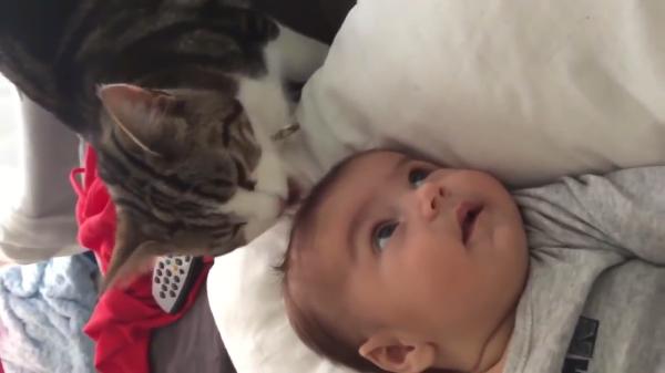 猫の美容師さん?赤ちゃんの髪をぺろぺろする猫がかわいい♡