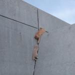 忍者猫参上!!コンクリートの壁もヒョヒョイと登り、行く手を阻む敵をも交わす!軽やかな技をご覧あれ〜