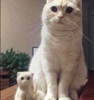 何ともほっこりする話♪♪愛猫の抜け毛で作ったミニ愛猫のお人形を愛猫に渡した結果に癒される♡
