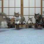 総勢13匹の猫ちゃんのごはんタイムに起きた悲劇!!ごはんそっちのけで逃げるべしww
