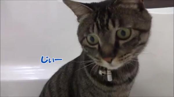 水が苦手…でもお風呂場のあるモノが猫じゃらしや追いかけっこ並みに大好きな猫ちゃん♪何が楽しいのかさっぱり分かりませんww