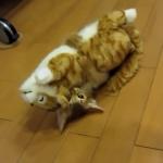 つられ笑い注意!笑う猫のおもちゃが大好きで遊びまくる子猫にボコボコにされても大爆笑の笑う猫w