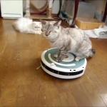 トイレに行くのはルンバで♪お掃除ロボットルンバに乗って自分のトイレに行く猫ちゃんがいた!!