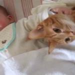 赤ちゃんにやりたい放題されても、赤ちゃんのそばにいてくれる猫ちゃんの愛情にほっこり♪