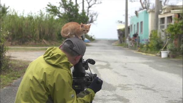 猫を撮影するつもりが、自分が被写体に!?写真家岩合光昭さんにすっかり懐いてしまった野良の子猫が自由すぎた