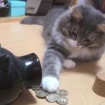 猫がネコババでリアルネコババwww「これでおやつ買ってにゃ〜」