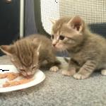 それ、ごはんじゃなくてお皿だよ(笑)!!猫の赤ちゃん一家ののほほん時間の過ごし方♪♪自由すぎて癒されるw