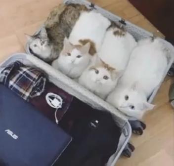 旅行に行こうとスーツケースを広げていたらほっこりな出来事が!!一緒に行きたい4匹の猫ちゃん達がとった行動が可愛すぎるw