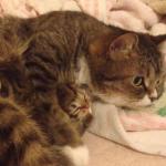 生まれたばかりの子猫をギューっと抱っこするママ猫!愛情たっぷりな姿に癒される♪