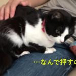飼い主さんのお膝が大好きな猫ちゃん♡降ろされそうになると必死に抵抗して踏ん張る姿がカワイイ♡