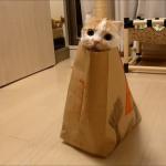紙袋の中身はにゃんだろにゃ??紙袋ですごい楽しそうに遊ぶ猫ちゃん♪♪
