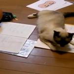 息子ちゃんの宿題を阻止するにゃ!教科書をかじったりケリケリしたりやりたい放題の猫ちゃんww