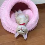 何がどうしてそうなったwww猫ベッドの使い方がなんだかオカシイ子猫が可愛いすぎたw