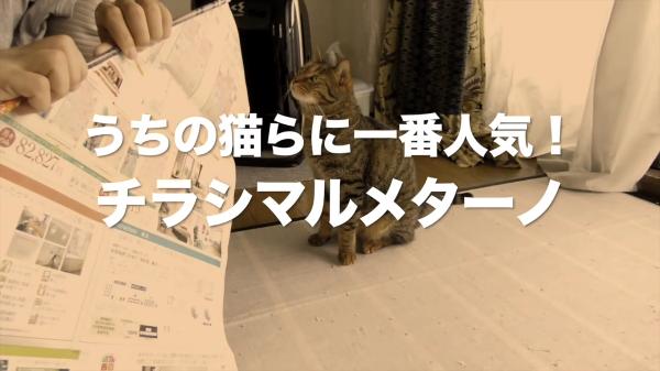 お家で簡単猫ちゃんのおもちゃを作っちゃお☆猫ちゃんの食いつきも良好!その名も「チラシマルメターノ」www