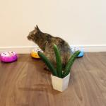きゅうりドッキリ☆食事中の猫ちゃん達の背後にコッソリきゅうりを置いてビョーン!と飛び跳ねて驚いてもらうはずが…